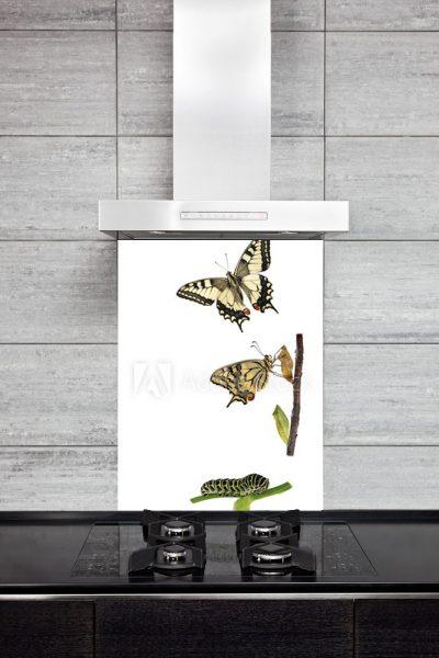 Kitchen Splashback Butterfly's life