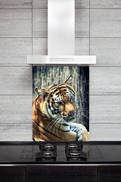Kitchen Splash Back Tiger Image