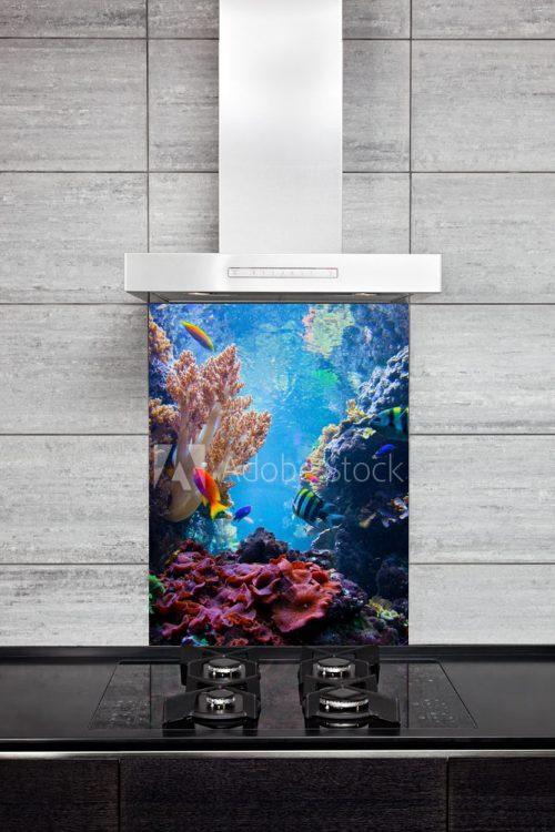 Sea Reef Splash Back
