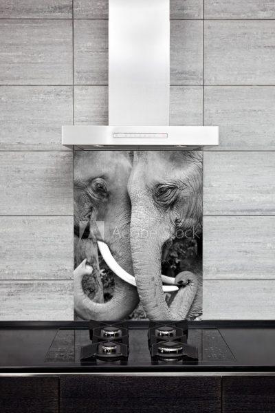 Kitchen Splashback Animals Collection