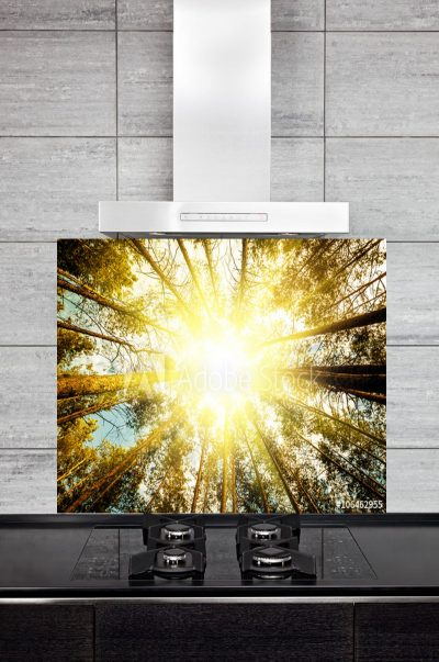 Kitchen Splashback Pine Forest Trees
